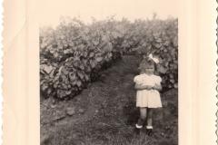 Françoise dans les vignes 1953
