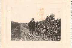 Jacqueline inspecte le vignoble bretonniere